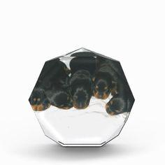 #Rottweiler Puppies Award - #rottweiler #puppy #rottweilers #dog #dogs #pet #pets #cute