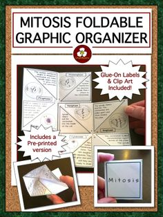 Foldable Graphic Organizer with differentiated versions, label cards for bulletin boards or word walls, and two sets of Mitosis Clip Art (.png and .jpeg) with COMMERCIAL USE PERMITTED. $