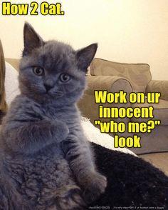 How 2 Cat.