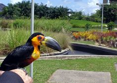 Mangal das Garças Park - Belém, Pará