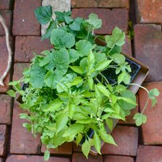 A Crash Course in Container Gardening: Everything You Need to Know