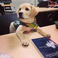"""""""Ummm…puppies don't have to read at this school, right?"""" 