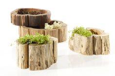 Stump bowls for succulents
