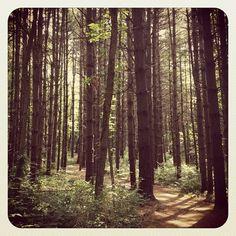 Adam Run Trail @ Hampton Hills Metro Park, Photo by nickilock