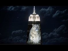 Illuminating the Plight: Here's the Empire State Building endangered animals show in under 1 minute - YouTube