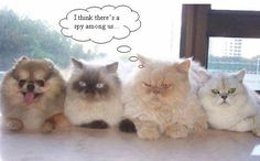 Pinterest Funny Cats and Dogs | spy_Funny_cats_and_dogs_pics-s575x358-49238-580.jpg