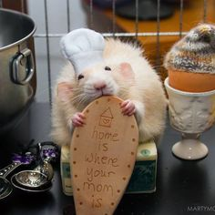 The Ratatouille Meet Adorable Marty, The Most Photogenic Rat That Ever Lived • Page 3 of 6 • BoredBug