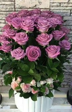 Beautiful Rose Flowers, Flowers Nature, Amazing Flowers, Pretty Flowers, Rose Flower Wallpaper, Flower Backgrounds, Purple Roses, Pink Flowers, Rose Flower Arrangements