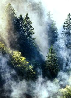 Misty Forest, Black forest Germany                                                                                                                                                     More