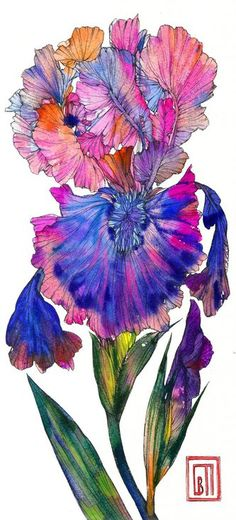 Buy Iris, Watercolor by Sofia Perina-Miller on Artfinder. Discover thousands of other original paintings, prints, sculptures and photography from independent artists. Paintings For Sale, Original Paintings, Iris Art, Sculptures, My Arts, Watercolor, Wall Art, My Favorite Things, Drawings