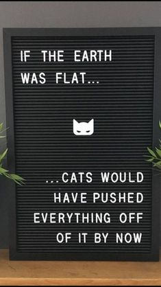 Cute Cats, Funny Cats, Funny Animals, Cats Humor, Funny Horses, Silly Cats, Adorable Kittens, Crazy Cat Lady, Crazy Cats