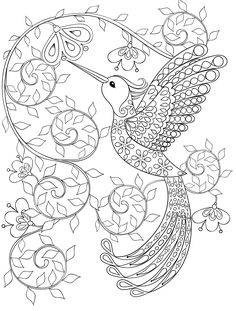 Hummingbird Coloring Pages For Adults Free Dwonloadable