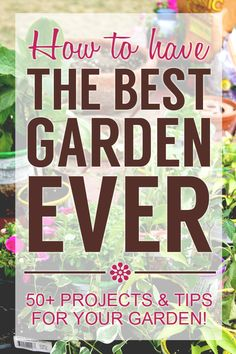 Gardening Tips How To Have The Best Garden Ever - 50 projects and tips for your garden! - 50 projects and tips on how to have the best garden ever! Links to full and detailed tutorials to help your garden this year. Outdoor Projects, Garden Projects, Diy Projects, Amazing Gardens, Beautiful Gardens, Organic Gardening, Gardening Tips, Beginners Gardening, Gardening Quotes