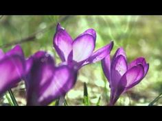 Valsul primăverii-Dmitri Shostakovich _ Waltz No.2 - YouTube
