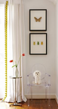 Cute dog on chair helps it not get lost in the shot while also defining the scale of the room. Tips from photographer Jean Allsopp in House of Fifty Mag