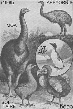 extinct or rare animals
