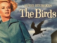 The Birds by Daphne Du Maurier: Short Story Review Bird Attack, Alfred Hitchcock The Birds, Daphne Du Maurier, Lazy Town, In Sync, Old Flame, Reading Stories, Seaside Towns, Classic Literature