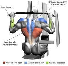 Behind The Neck Lat Pulldown Muscle Activation