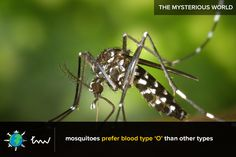 #health #mosquitoes #facts