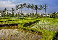 Kalibaru curves, Java (Indonesia)