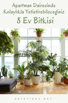 Apartman Dairesinde Kolaylıkla Yetiştirebileceğiniz 8 Ev Bitkisi Çeşitleri | Estetikev