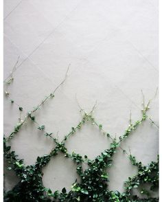 Living Wall Art - make that ivy WORK for you! #herb_garden_wall
