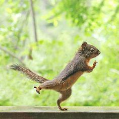 Squirrel Memes, Squirrel Art, Cute Squirrel, Squirrels, Funny Prints, Guide Dog, Yoga Gifts, Chipmunks, Cute Funny Animals