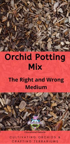 Orchid Potting Mix: The Right and Wrong Medium — Orchideria Orchid Plant Care, Orchid Planters, Orchid Repotting, Fall Planters, Container Gardening Vegetables, Succulents In Containers, Container Plants, Amigurumi