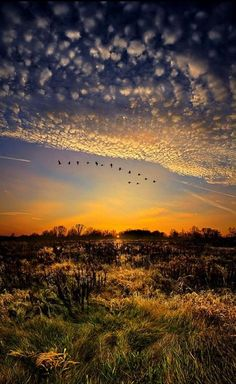 Geese flying at Sunrise and Sunset across the fields in the country ... Top 10 Mindblowing Landscapes