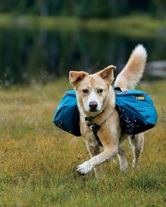 e0876d15e6 Approach Dog Backpack by Ruffwear Backpacker