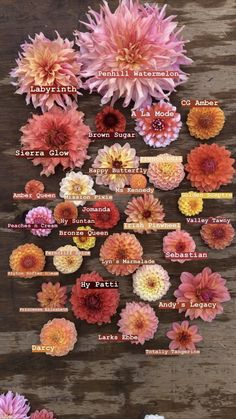 Types Of Flowers, Colorful Flowers, Beautiful Flowers, Fresh Flowers, Cut Flower Garden, Flower Farm, Dahlia Flower, Flower Decorations, Garden Inspiration