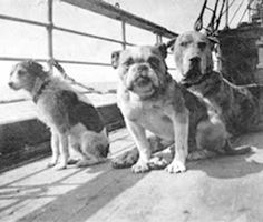 Pet dogs aboard the Titanic. Only 3 of the 12 dogs owned by Titanic passengers survived the disaster. At least one passenger is said to have given up her space in a lifeboat when her dog was not allowed to accompany her.