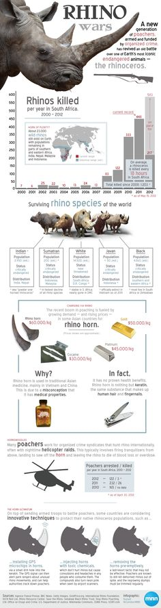 MNN.COM›Earth Matters›  Animals  Infographic: Understanding the rhino wars  When rhinos rebounded from the brink of extinction last century, it was a historic, hard-fought victory for conservationists around the world. But now, within just five years, the global rhino wars have suddenly returned -- along with a few 21st-century twists