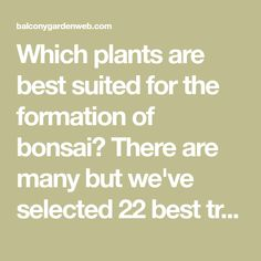 Which plants are best suited for the formation of bonsai? There are many but we've selected 22 best trees for bonsai. Check out! Bonsai Tree Types, Indoor Bonsai Tree, Bonsai Plants, Bonsai Trees, Plant Care, Check, Gardens, Desert Rose, Garden Ideas