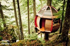 Amazing Hidden Tree House