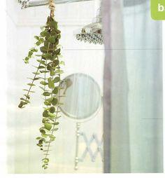 Eucalyptus in the shower