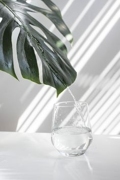 Benefits Of Drinking Water, Water Benefits, Not Drinking Enough Water, Water Aesthetic, Water Pictures, Free Plants, Light And Shadow, Flower Photos, Free Images
