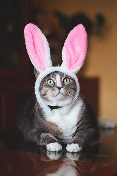 My lovely bunny / by Alexandra Kras on 500px