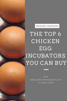 Interested in hatching your own eggs this year? Consider this buying guide for the best hatch ever. Interested in hatching your own eggs this year? Consider this buying guide for the best hatch ever. Chicken Incubator, Egg Incubator, Diy Herb Garden, Vegetable Gardening, Container Gardening, Gardening Tips, Garden Ideas, Flower Gardening, Hatching Chickens