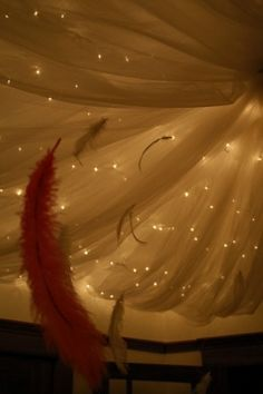 lights behind the draping