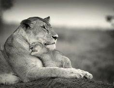 Leo and baby