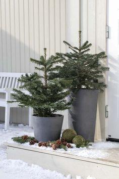 Juletre i potte blir stadig mer populært både ute og inne. Christmas Porch, Outdoor Christmas Decorations, Xmas, Diy And Crafts, Beautiful Places, Sweet Home, Planters, Exterior, Holidays