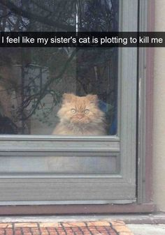 What your cats look like when they are caught on the act...