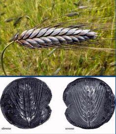 Η ΛΙΣΤΑ ΜΟΥ: Ζειά, το αρχαιοελληνικό 'σιτάρι'.