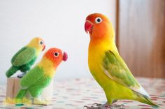 colorful felted birds