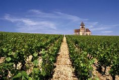 Préhy church / Chablis / France. They're known for their wine that is made from Chardonnay grapes.