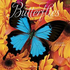 Butterflies Wall Calendar: Butterflies! Of all the insects in the world, these exquisite creatures most capture our imaginations. Butterflies display nature's collaboration between beauty and function. Lovely yet strong, mysterious and dazzling.  $13.99  http://calendars.com/Insects/Butterflies-2013-Wall-Calendar/prod201300002715/?categoryId=cat00342=cat00342#