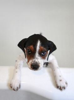 beagle bath