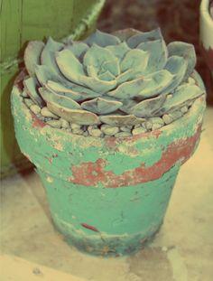 Vintage pot succulent