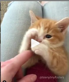 Cat Video Funny Pets Cute Cat Gif Cats Cats And Kittens